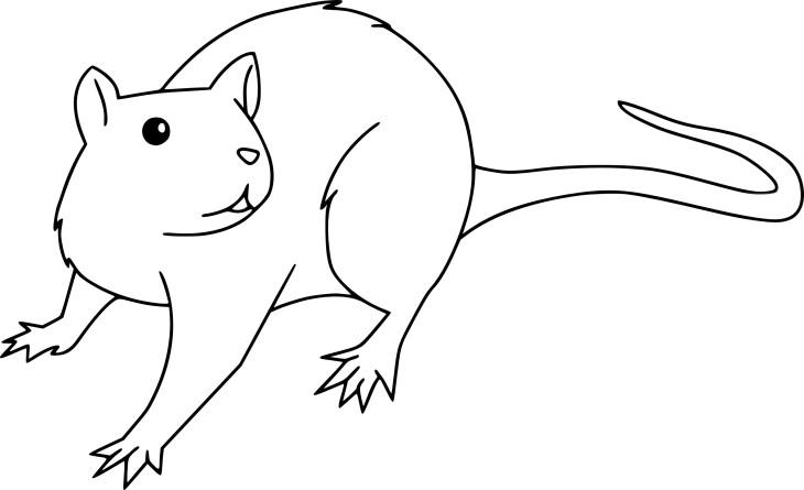 Dessin rat