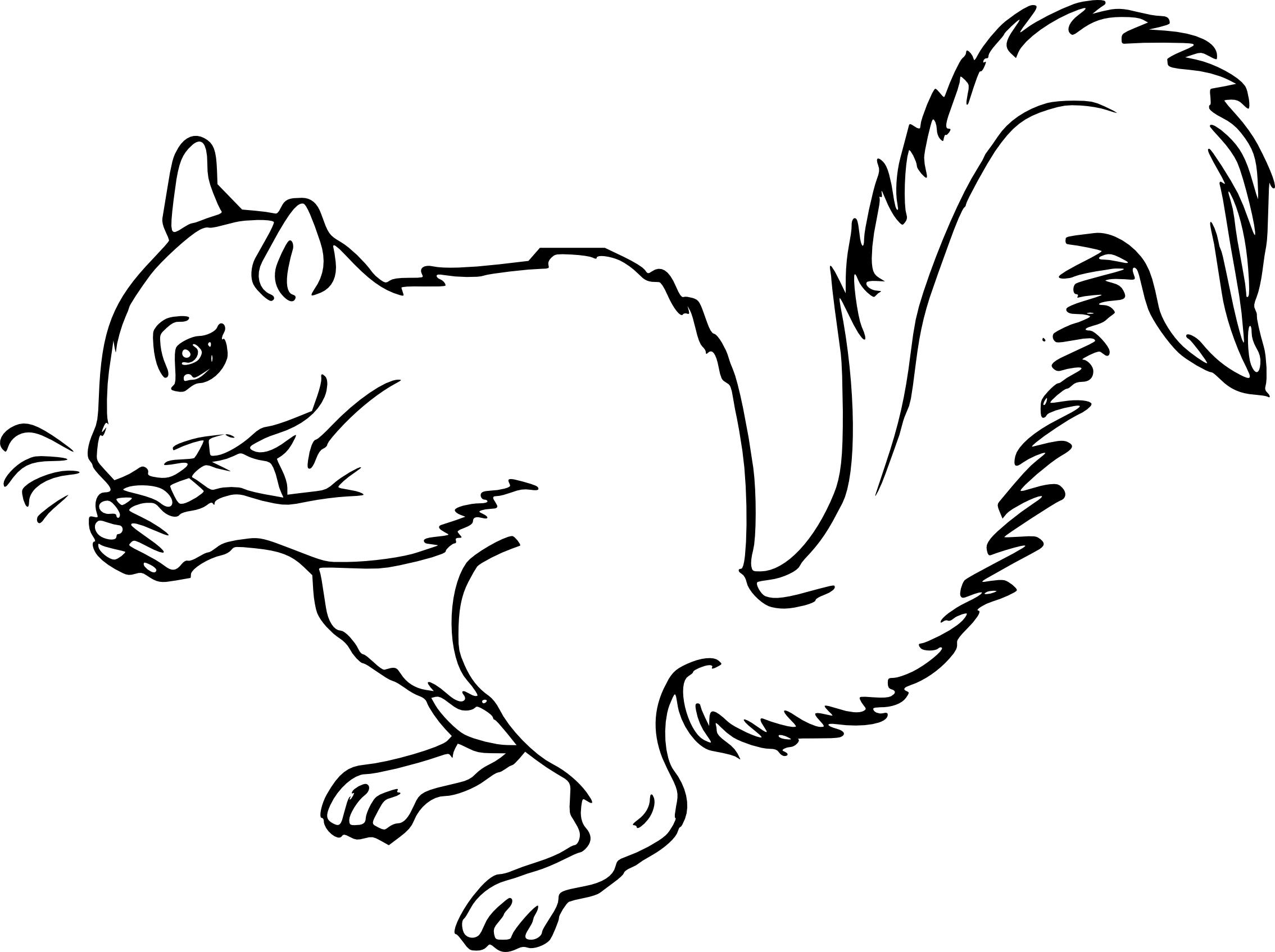 Coloriage cureuil et dessin imprimer - Coloriage d ecureuil ...