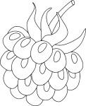 Framboise dessin