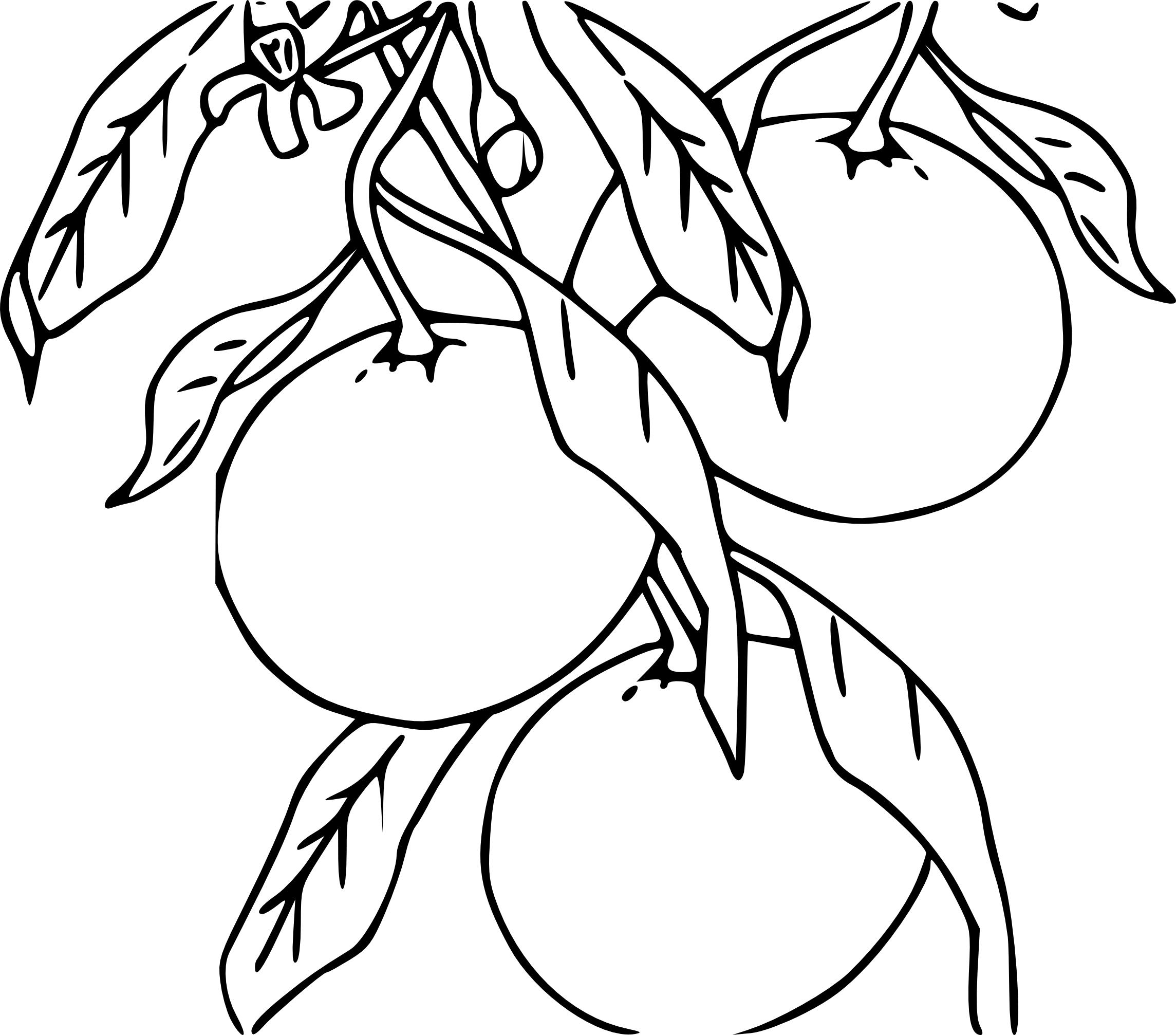 Mandarine dessin