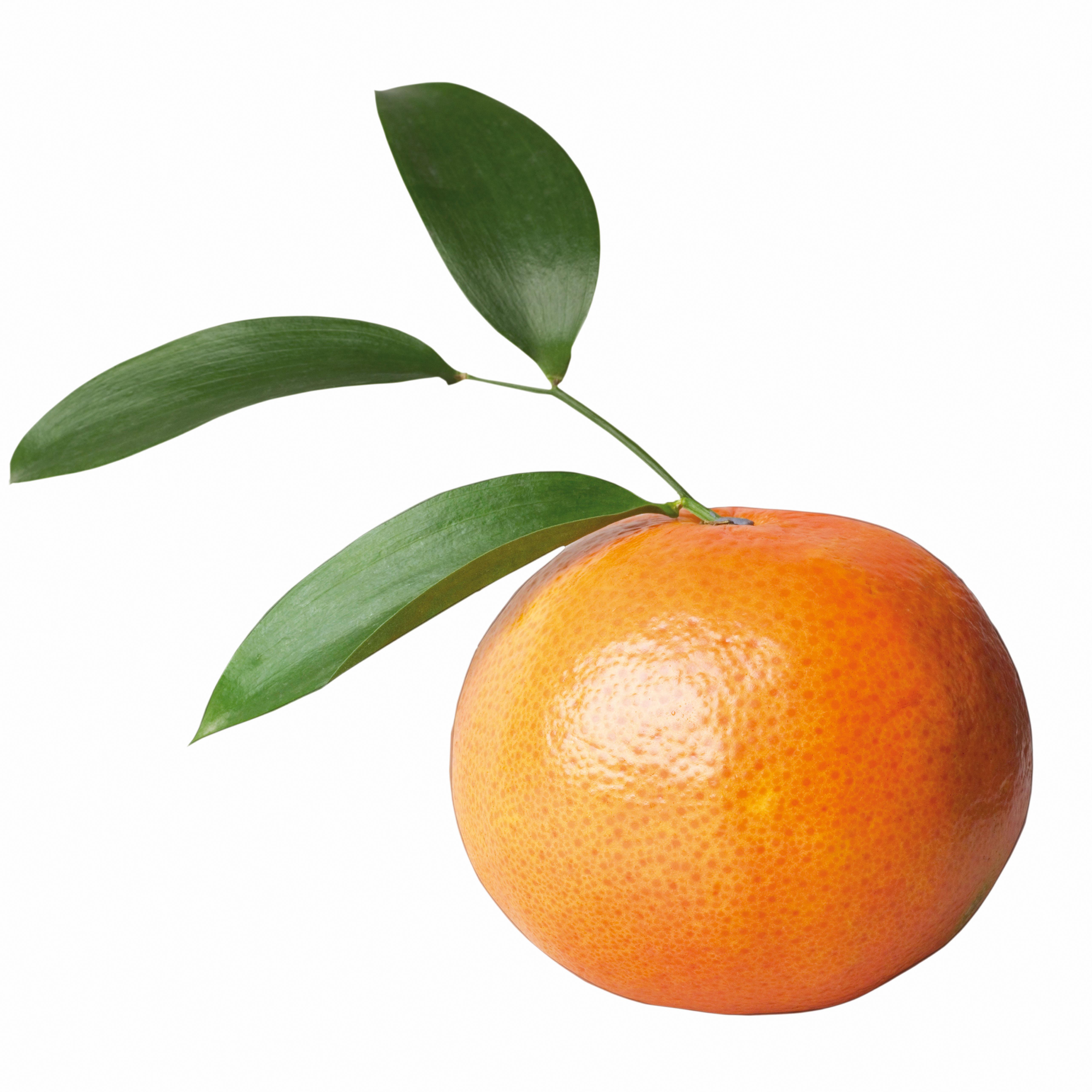 coloriage mandarine et dessin à imprimer