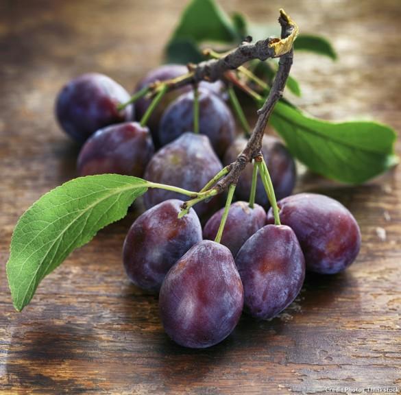 Prune fruit