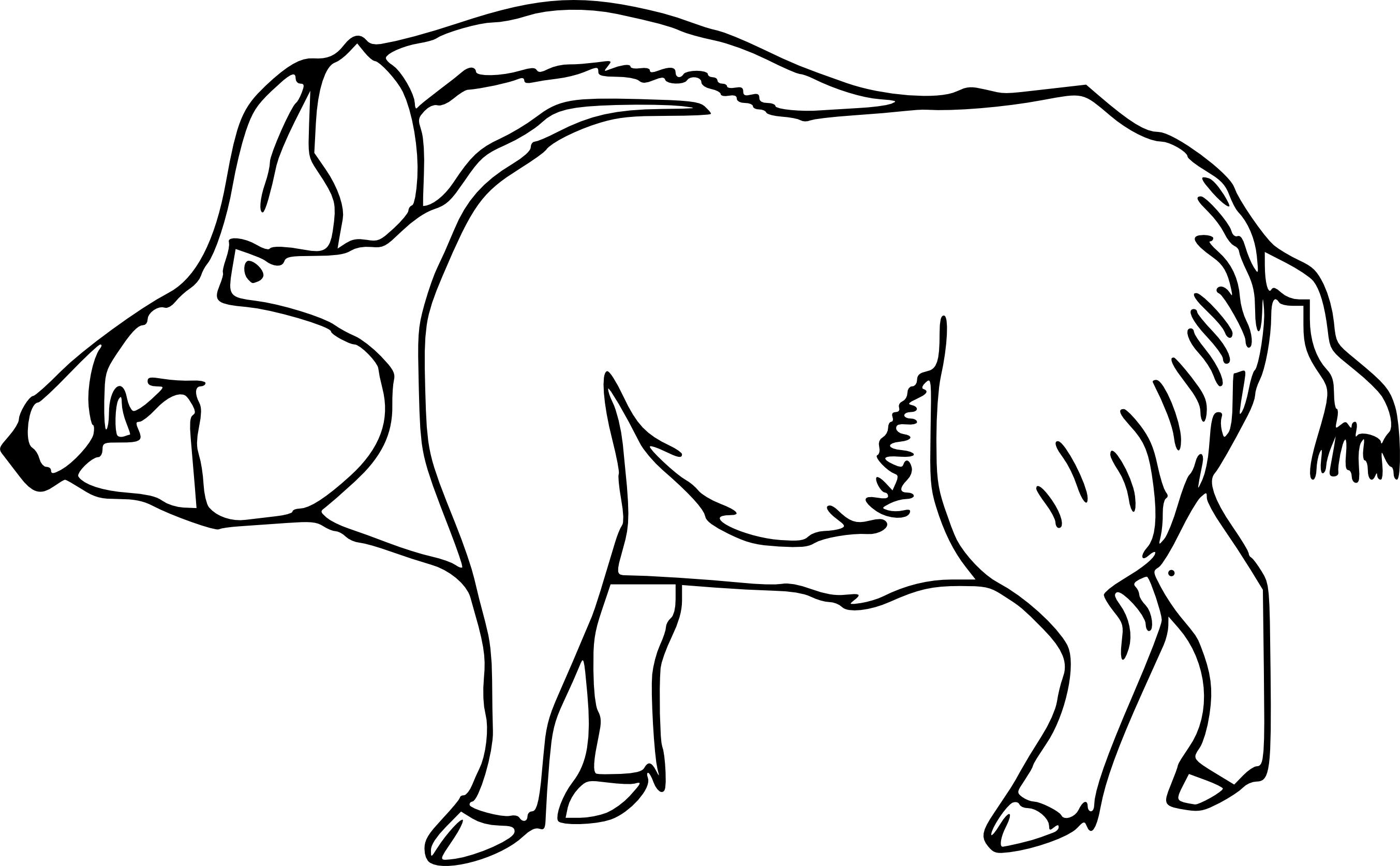 Sanglier dessin