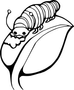 Coloriage chenille mange une feuille