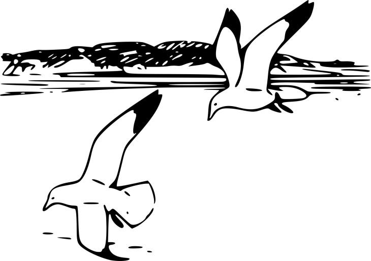 Coloriage oiseau goeland