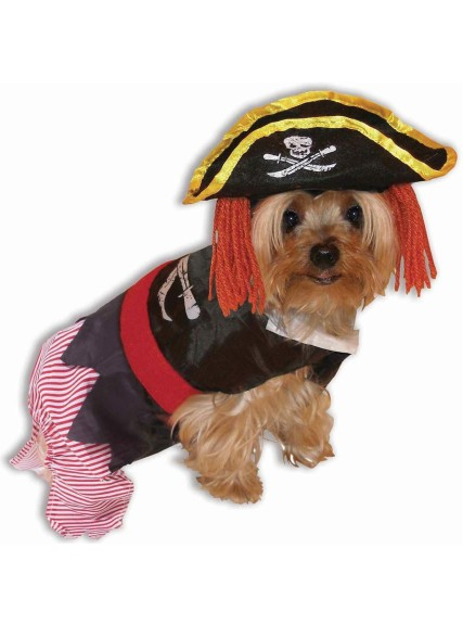 Chien pirate