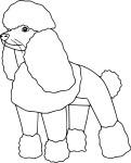 Coloriage chien caniche