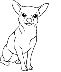 Coloriage chien Chihuahua