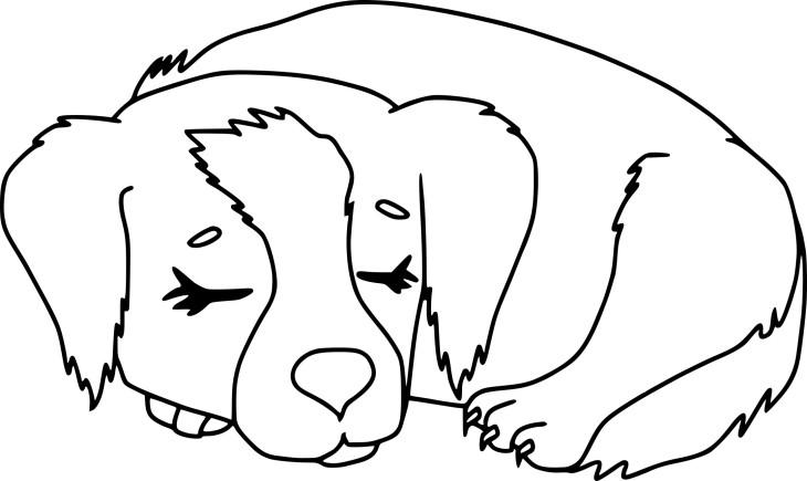 Coloriage chien qui dort à imprimer