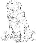 Coloriage chien Saint Bernard