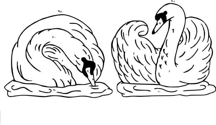 Coloriage deux cygnes