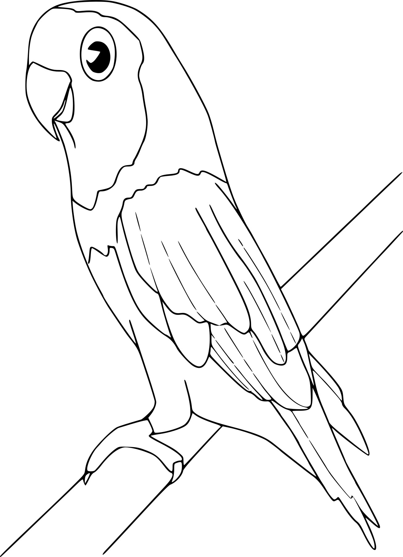 Coloriage oiseau ara