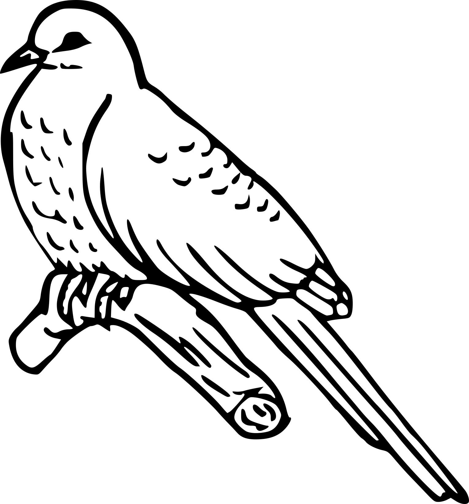 Coloriage oiseau coucou