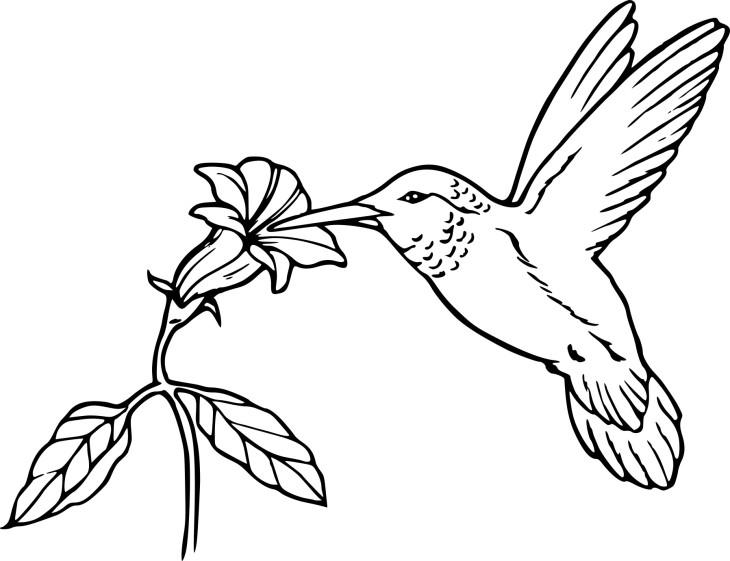 Coloriage oiseau en vol