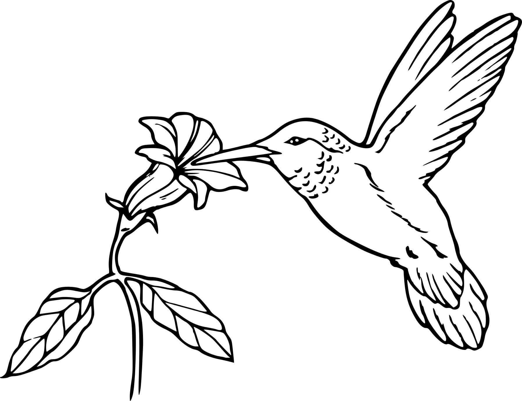 Coloriage oiseau en vol imprimer - Modele d oiseaux a dessiner ...