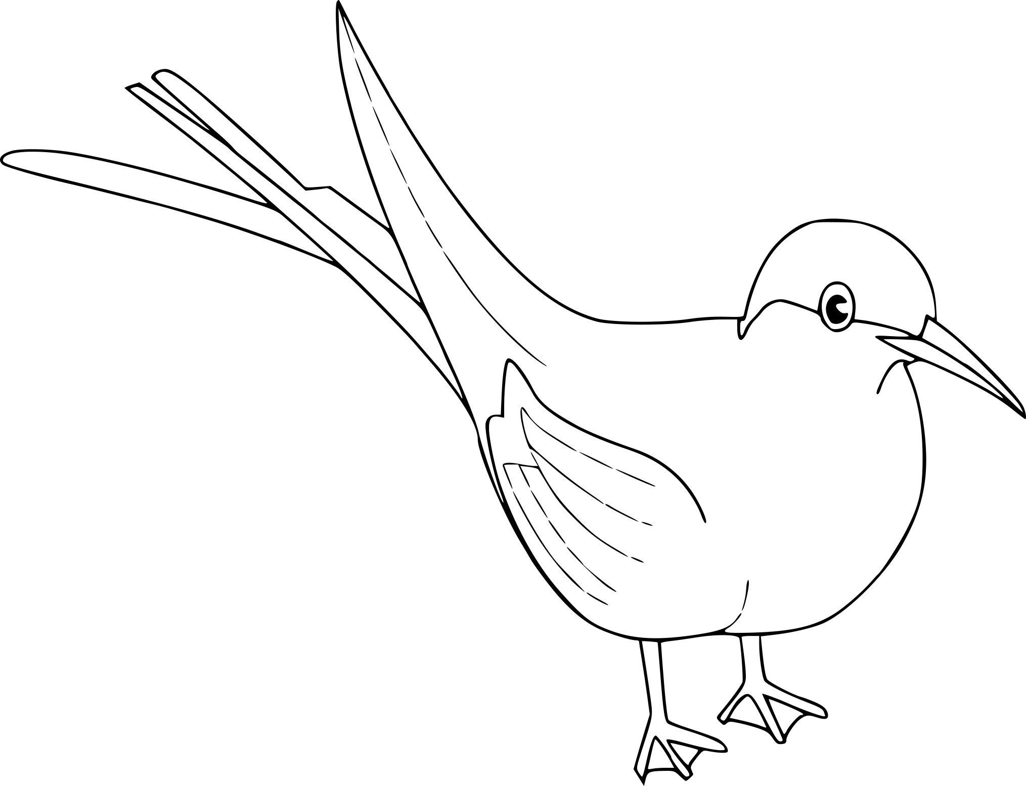 Coloriage oiseau merle