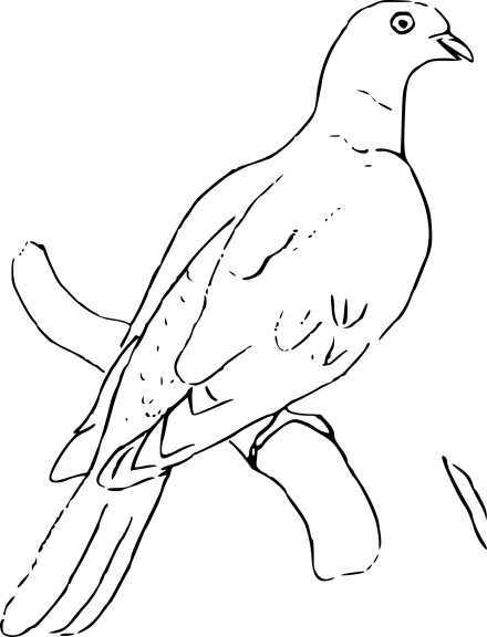 Coloriage pigeon