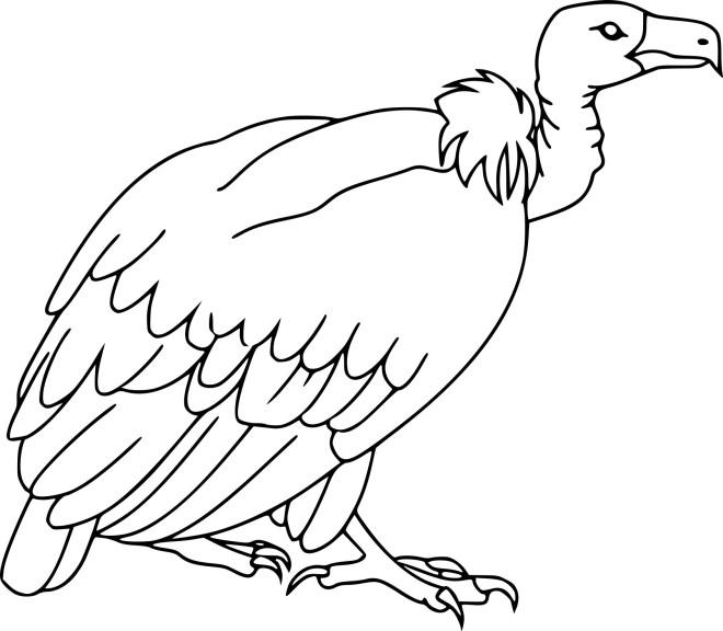 Coloriage vautour