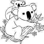 Koala dessin