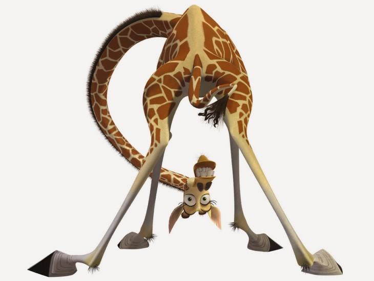 Madagascar girafe