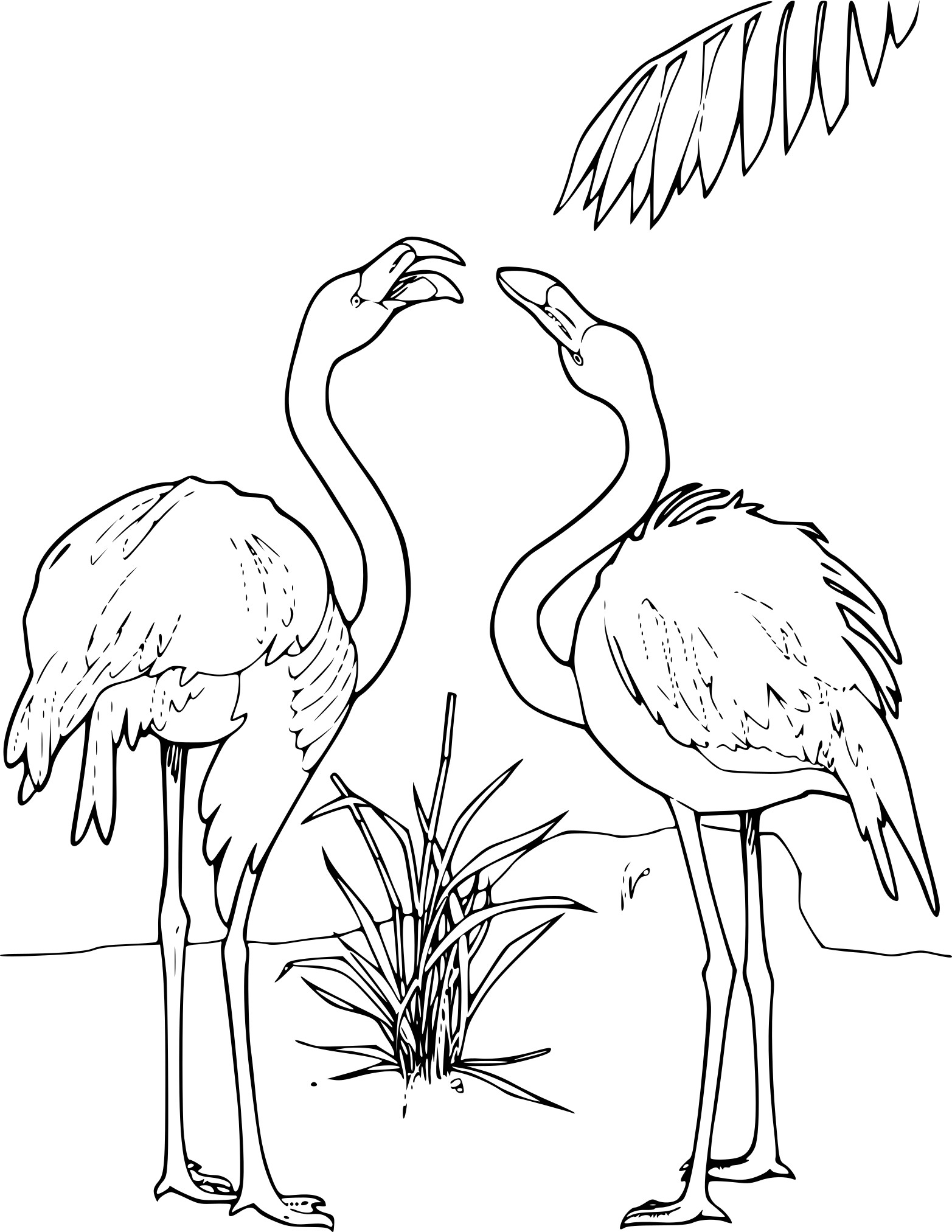 Coloriage deux flamants
