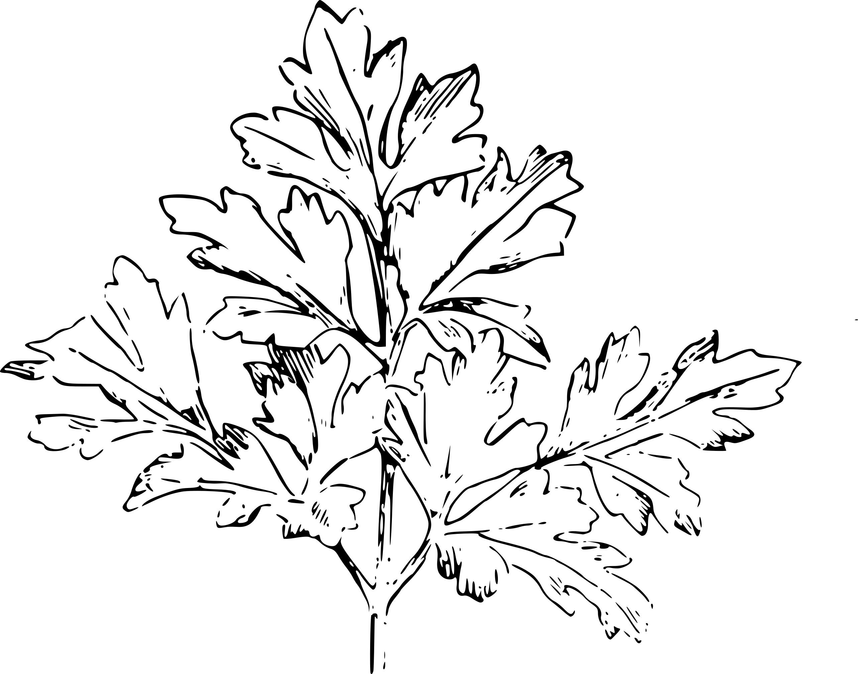 Coloriage persil