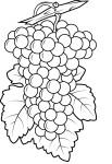 Coloriage raisin