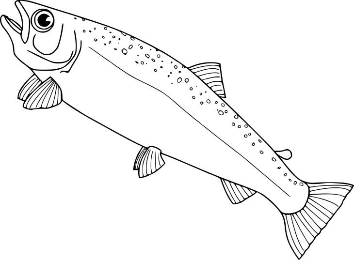 Coloriage saumon
