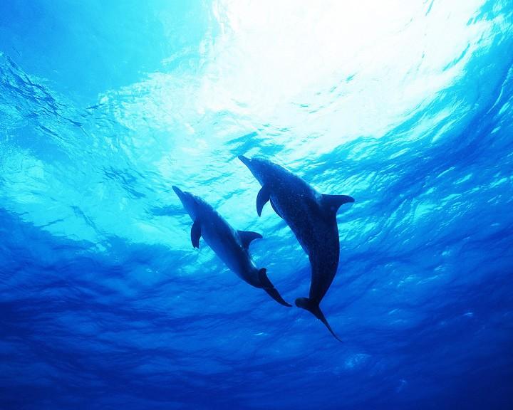 Dauphin sous l'eau
