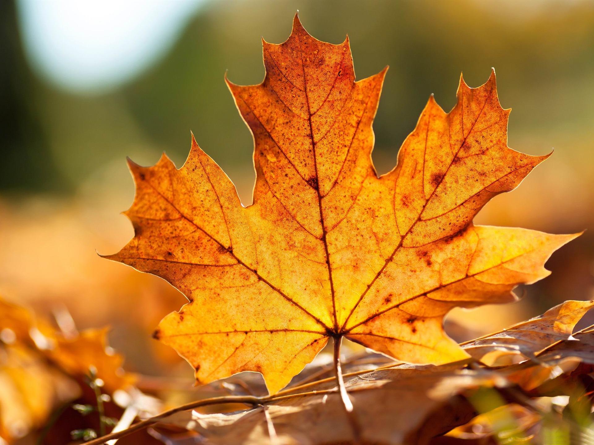 Coloriage feuille d automne imprimer - Feuille automne dessin ...