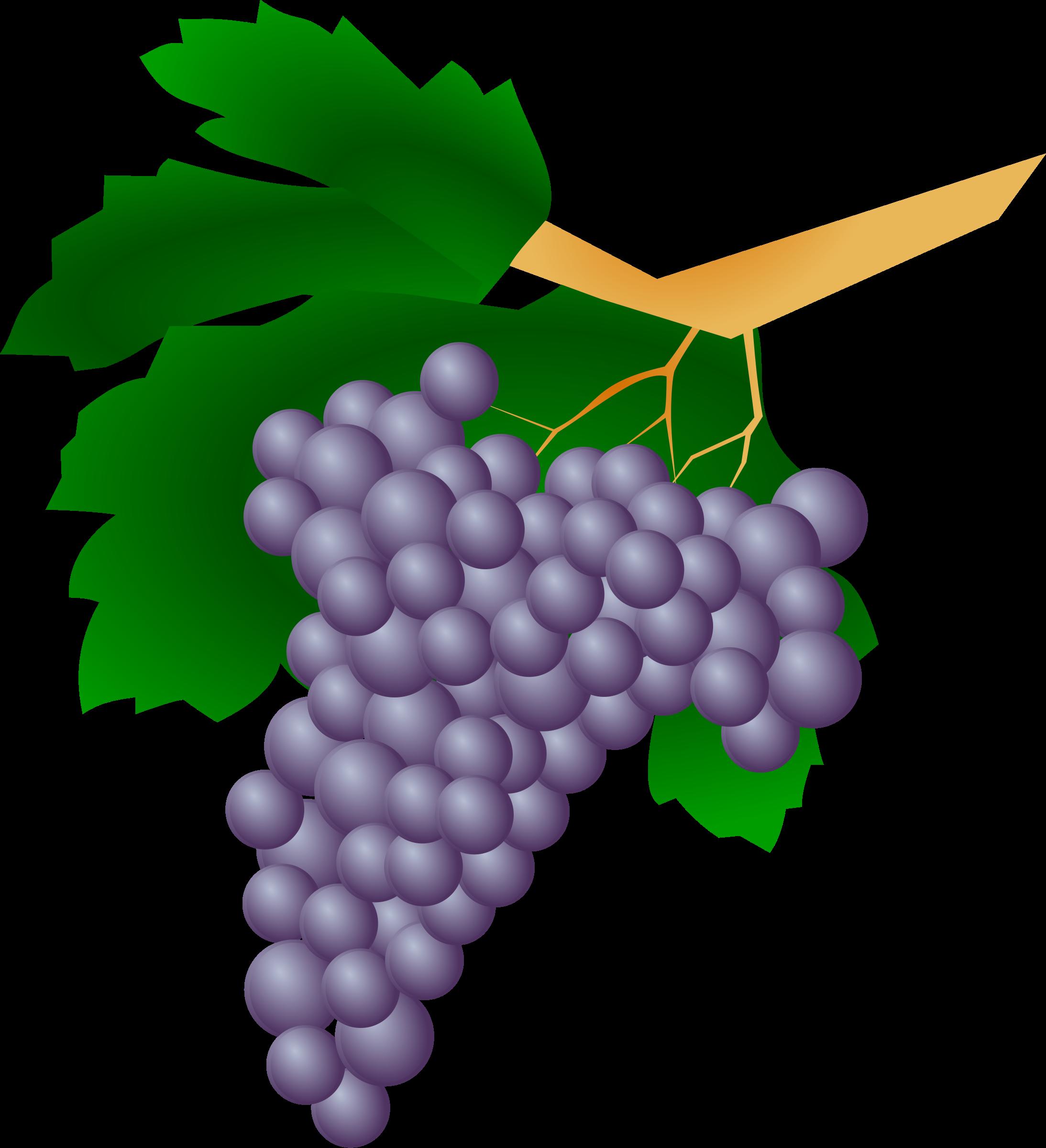Coloriage raisin à imprimer