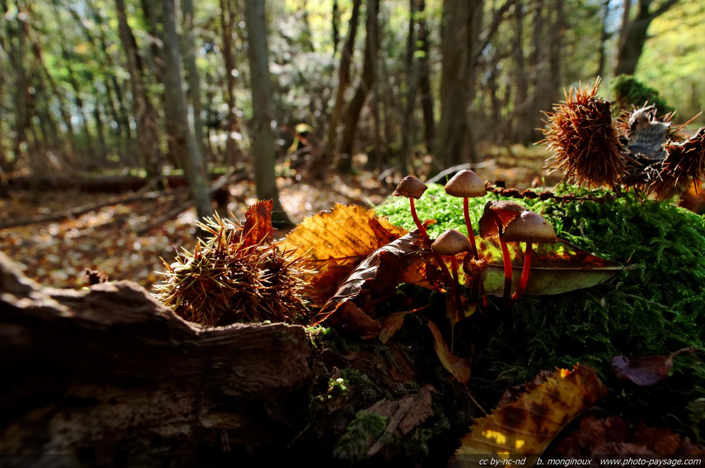 Coloriage automne champignon imprimer - Dessin de champignons a imprimer ...