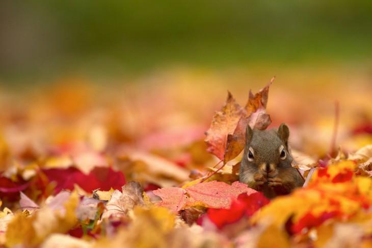 Automne ecureuil