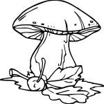 Coloriage automne champignon
