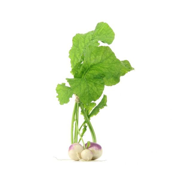 Navet legume