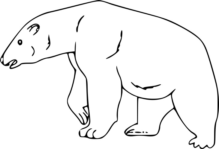 Ours polaire dessin