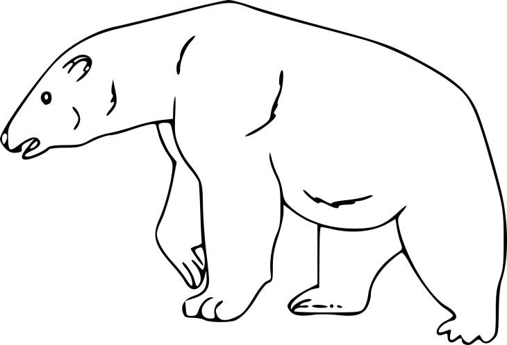 Coloriage ours polaire et dessin imprimer - Ours a dessiner ...