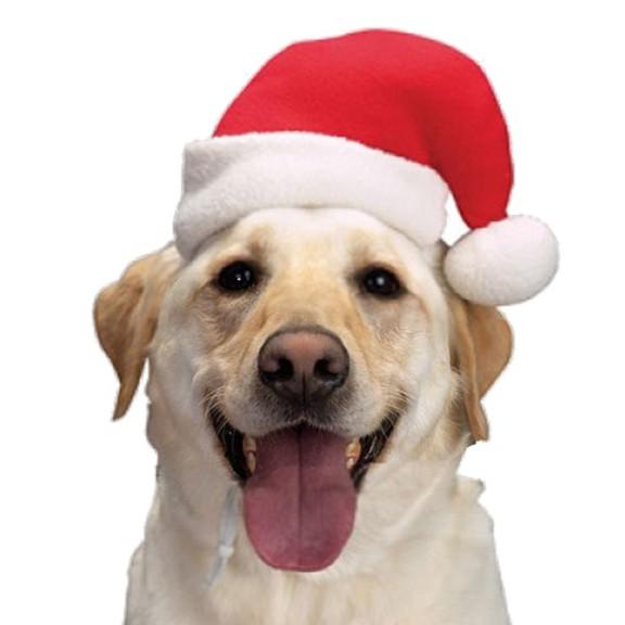 Noel chien