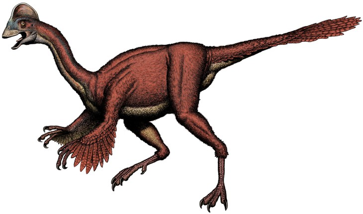 Oviraptor Dinosaure