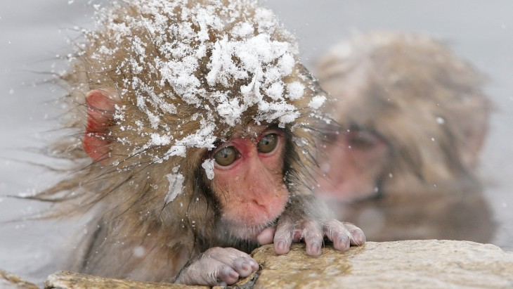 Singe sous la neige