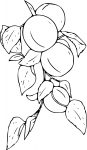Coloriage abricotier